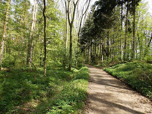 zdjecie,600,558166,20150508,dukt-w-lesie-ratynskim